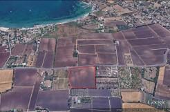 Masseria Catania-porzione minore 3,5 ettari(35000mq)